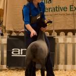 Jordan's 127 Pount Ewe Lamb