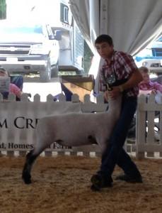 Virginia State Fair Market Lamb Show Results