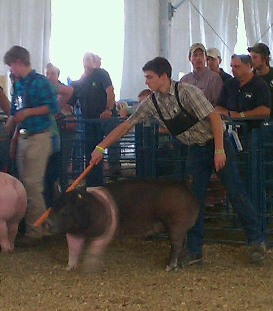 Champion Senior Pig Showman
