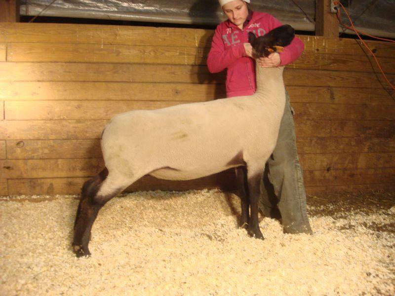706 Creole ewe