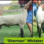 Sherman Fall 2010b