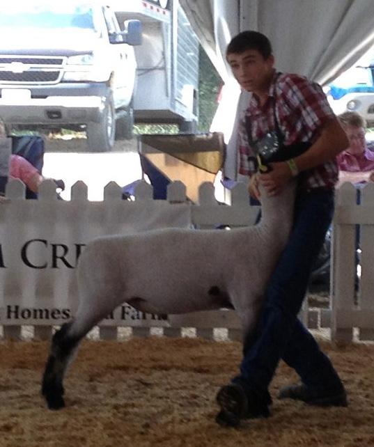 135lb Lamb (Allred Elliot Bred)