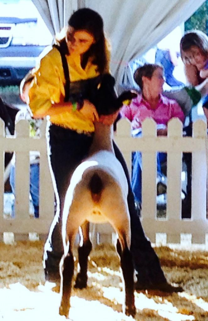 Commercial Ewe Lamb