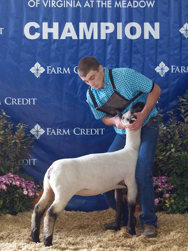 2015 VA State Fair Market Lamb Show Results