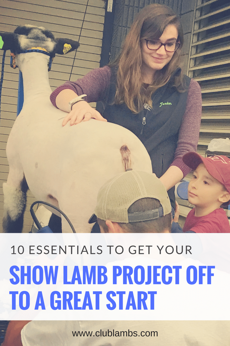 10 Essentials To Get Your Show Lamb Project Off To A Great