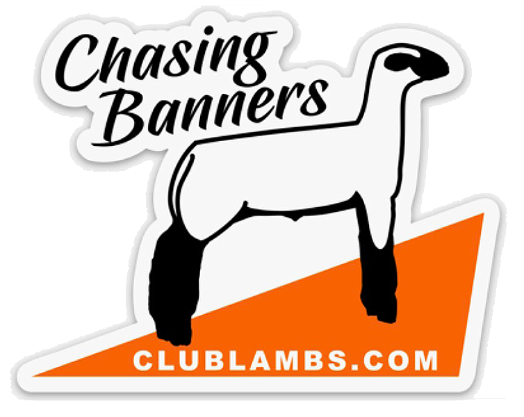 Show Lamb Stickers For Sale Chasing Banners Sheep Decal