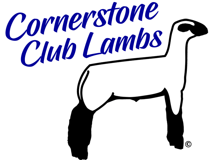 Cornerstone Club Lambs for Sale and Rams for Sale