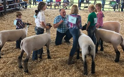 What Size Lamb To Select For Your Terminal Show