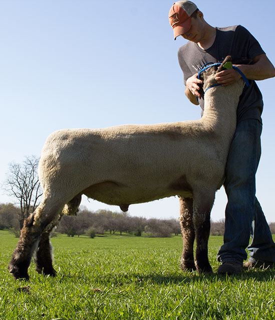 Commander: Impact Hamps Fully Armed Stud Rams