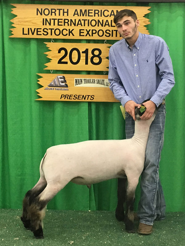 Keystone International Livestock Exposition Market Lamb Show Results